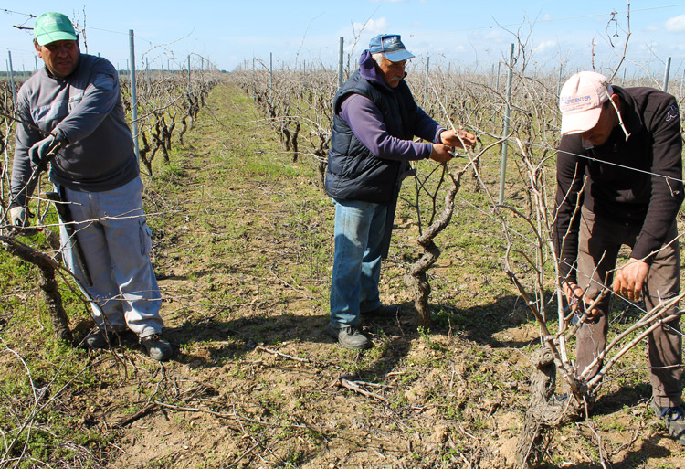Work in the vineyard